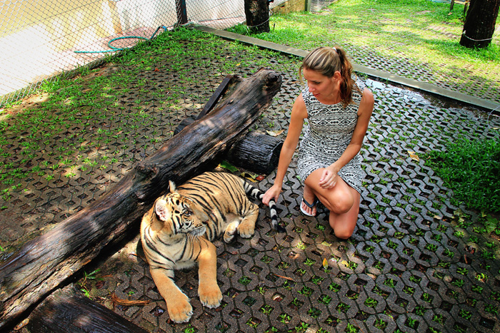 chiang_mai_tiger_kingdom19