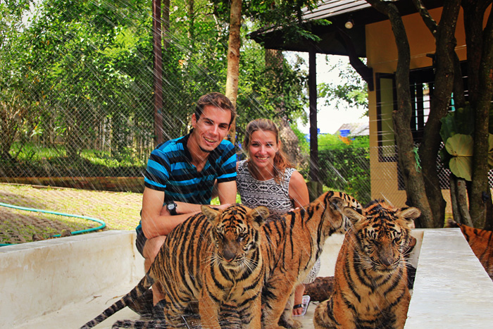 chiang_mai_tiger_kingdom23