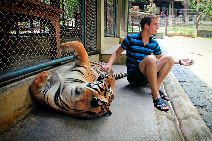 chiang_mai_tiger_kingdom29
