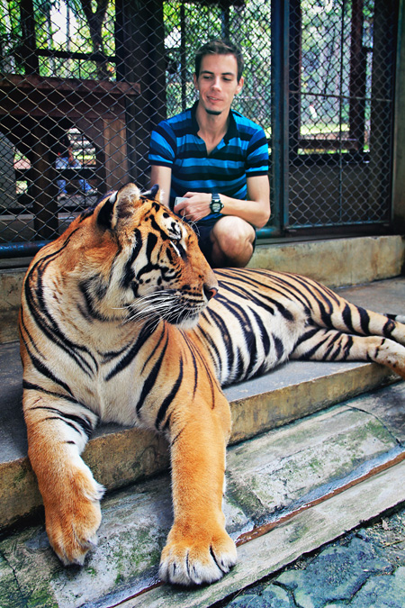 chiang_mai_tiger_kingdom35